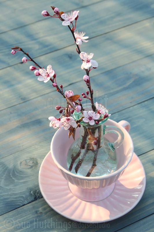Teacup with Blossom-2 by Sue Hutchings