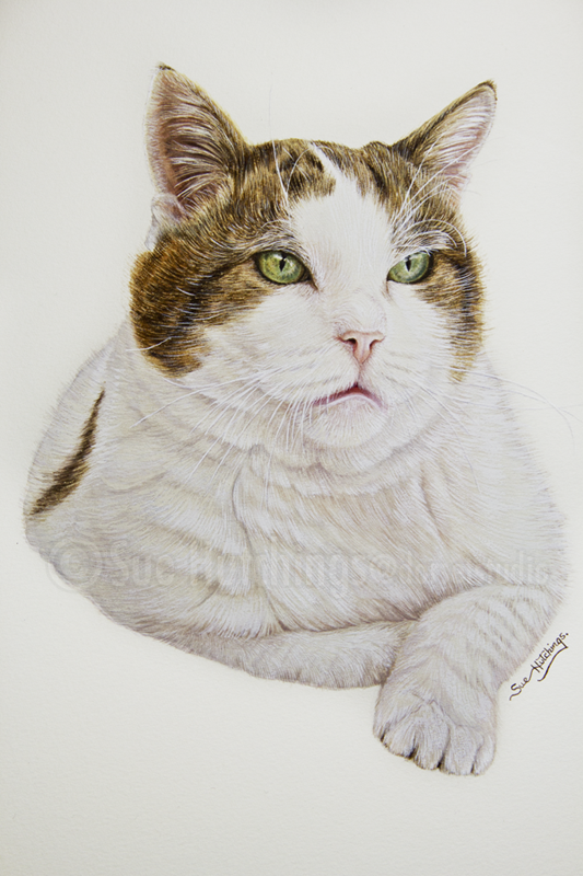 Casper a cat painting by Sue Hutchings